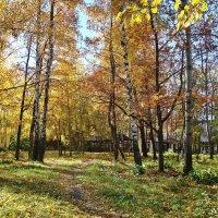 Солнечная осень :: Лидия (naum.lidiya)