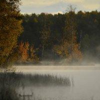 Осенний туман.... :: Юрий Цыплятников