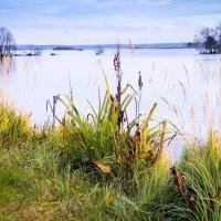 На берегу озера :: Виталий