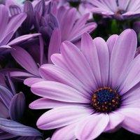 цветы :: Julia C.