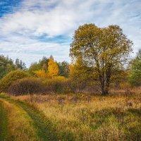 Цвет осени 3 :: Андрей Дворников