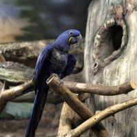 Ещё птичка :: PooH63 -