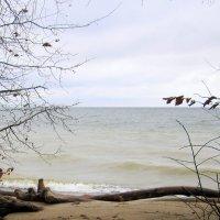 Бежит из глубины волна ... :: Мила Бовкун