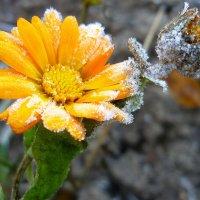 Я замороженный цветок :: Павлова Татьяна Павлова