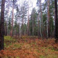 Лесной хоровод. :: Мила Бовкун