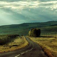 По дороге домой :: Анастасия Ефремова