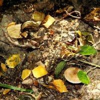 Осенний лес :: Татьяна Богачева