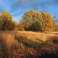 Осень золотая :: Павлова Татьяна Павлова
