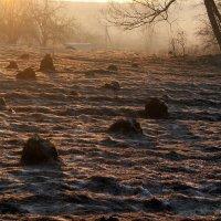 Морозное утро. :: Алексей Окунеев