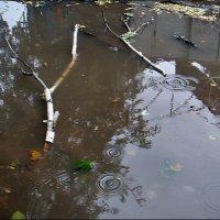 Кап-кап-кап, пел песенку осенний дождик... :: Нина Корешкова