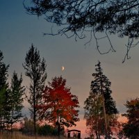 Вечер в Роще памяти :: Валерий Талашов