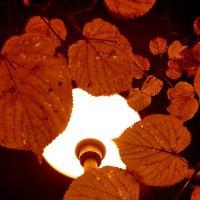 фонарь :: Валентина Папилова