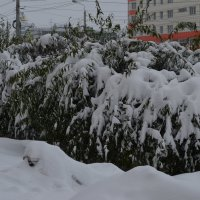 22 Октября-снегопад в Омске :: Savayr