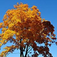 Це осінь :: Степан Карачко