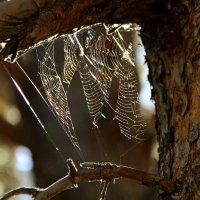 Радужные паутинки :: Светлана Попова