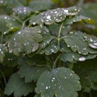 После дождя :: Алексей Масалов