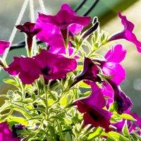 цветок :: Адик Гольдфарб