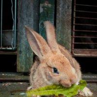 Кролик Сына :: Марина Дубровина