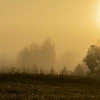 Солнечный туман :: Александр