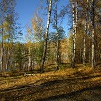 Конец октября :: Вячеслав Минаев
