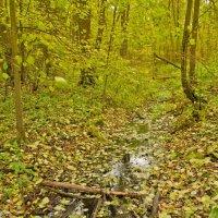 Осенний лес. :: Виктор Евстратов