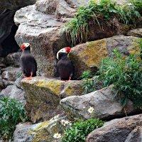 Камчатские пингвины :: Скиталец Сан