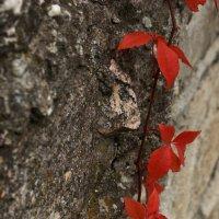 осенние листья винограда :: xcom xcom