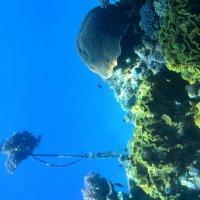 подводный мир :: xcom xcom