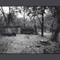 Черно-Белая Осень :: Ахмед Овезмухаммедов
