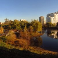 Золотая Осень в Лосином острове :: Андрей Лукьянов