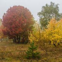 Осени краски :: Виктор Позняков