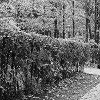 Одинокая осень :: M Marikfoto