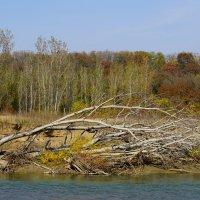 Осень на реке Уруп :: Игорь Сикорский
