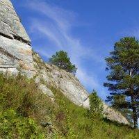 Сосна у подножия скалы :: Наталия Григорьева