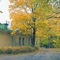осень :: Виктория Жуланова
