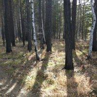 Осень в лесу. :: Андрей