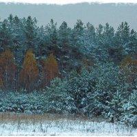 Второй снег. :: Николай Масляев