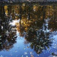 Уплывают последние листья... :: Вера Моисеева
