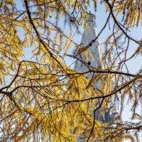 В октябре закружат жёлтые метели :: Ирина Данилова