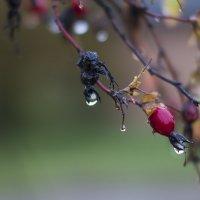 После дождя. :: Ольга Русецкая