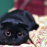 Домашние животные :: _SERGEY_ _PHOTO SESSION_