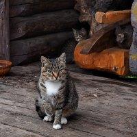Кошка и котёнок...:))) :: Ира Егорова :)))