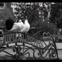 Скамья любви и примирения... :: Daniel (Fichetto)
