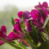 Цветы :: Полина Шлапакова