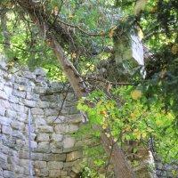 Руины старой крепости-2. :: Руслан Грицунь