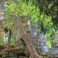 Руины старой крепости-1. :: Руслан Грицунь
