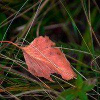 Осенний лист :: Мария Богуславская