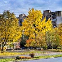 золотая осень :: юрий иванов