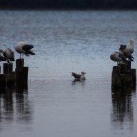 птицы на озере :: Наталья Литвинчук