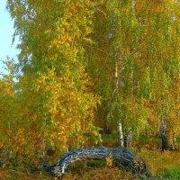 Осенняя сказка. :: nadyasilyuk Вознюк